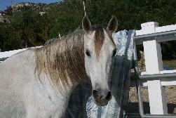 Horses For Sale San Diego Orange County Riverside