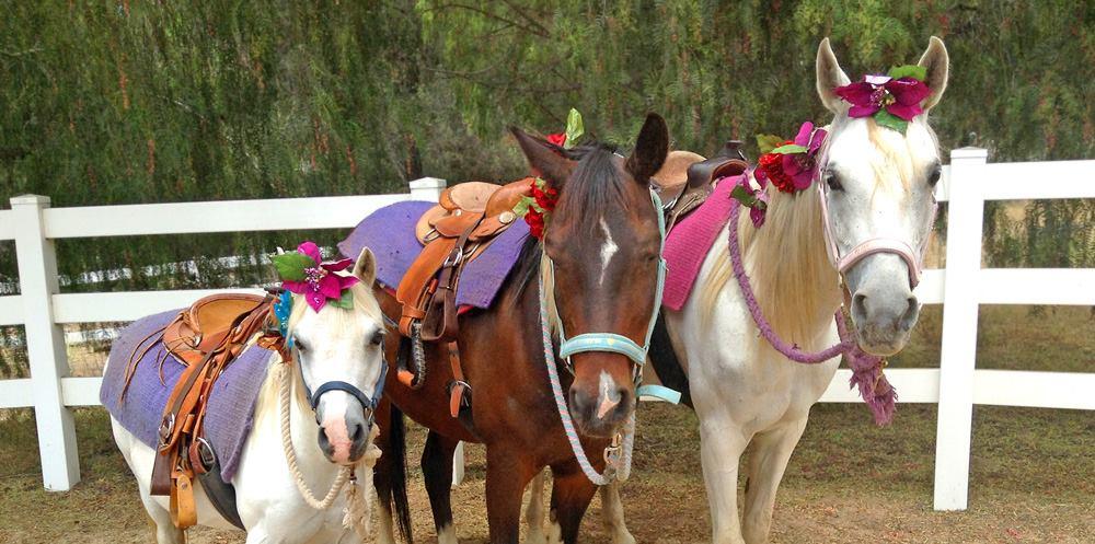San Diego Pony Rides